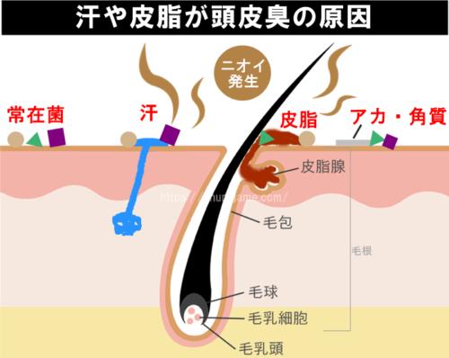 汗や皮脂が頭皮臭の原因